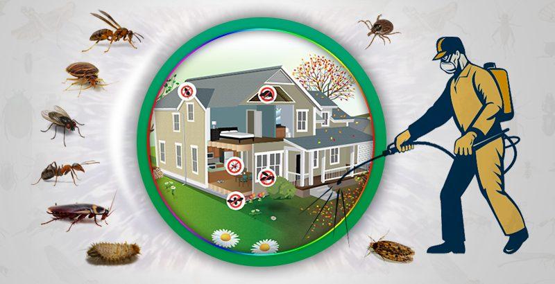 pest control service abu dhabi